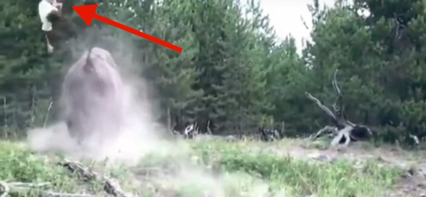 A 9-Year-Old Girl Was Thrown In The Air By A Charging Bison In Yellowstone Park