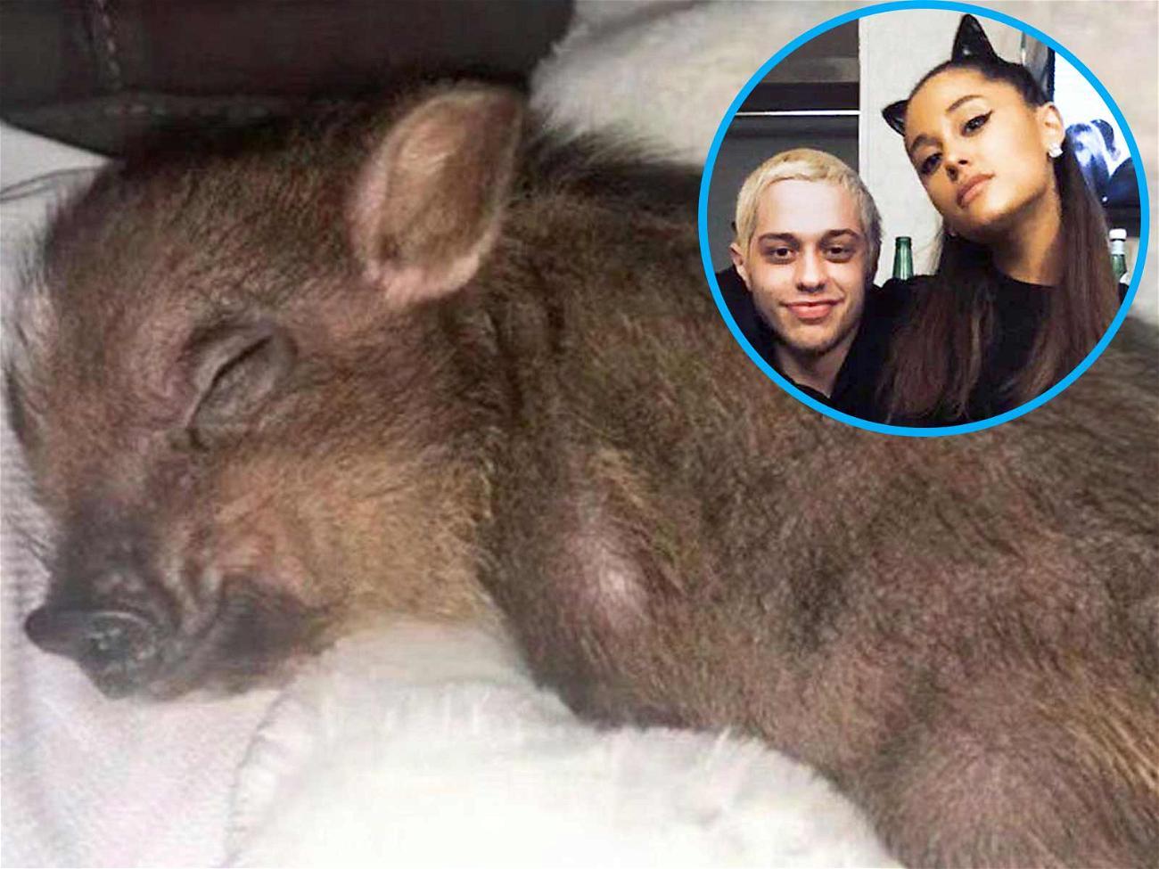 Ariana Grand and Pete Davidsons Piggy Smalls