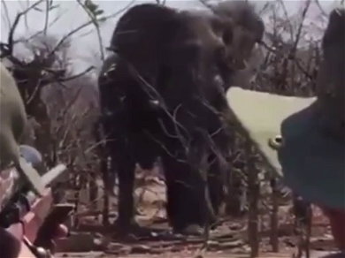 Ireland Baldwin Shares BRUTAL 'Trophy Hunting' Elephant Video — 'We Have To Protect These Animals'