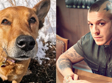 See 'Sons Of Anarchy' Star Theo Rossi's Crushing Tribute To His Dogs He Had To Put Down