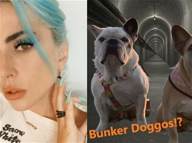 Lady Gaga Building 'Panic Rooms' For Her Dogs? Scoop Or Dupe?