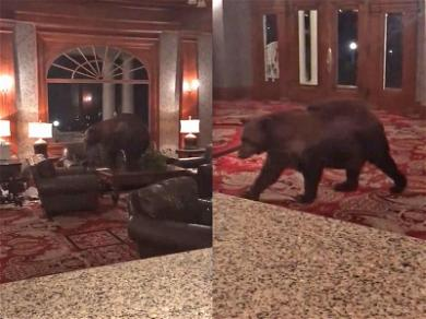 So, a Bear Walks Into 'The Shining' Hotel … for Real