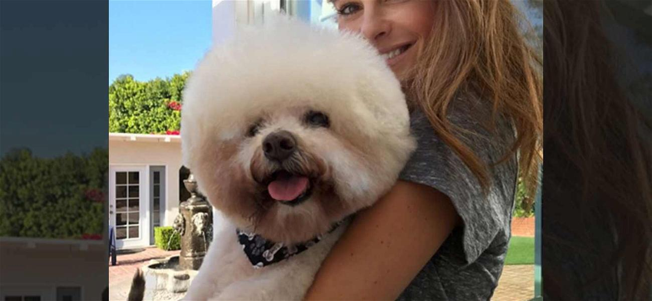 Maria Menounos Mourns Her Beloved Doggy Benjamin After His Death