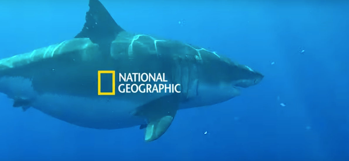 'Sharkfest' Unveiled New Footage Of The Biggest Great White Ever Caught On Camera