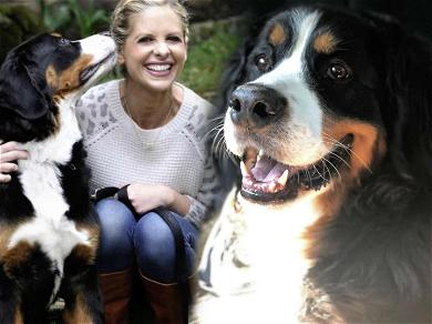 Sarah Michelle Gellar Says Goodbye to Beloved Bernese Bella With Tear-Jerking Message