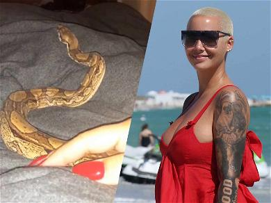 Amber Rose Slithers In Bed With New Friend