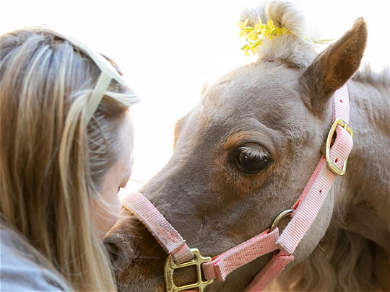 Kaley Cuoco Mourns Loss of Beloved Dwarf Pony