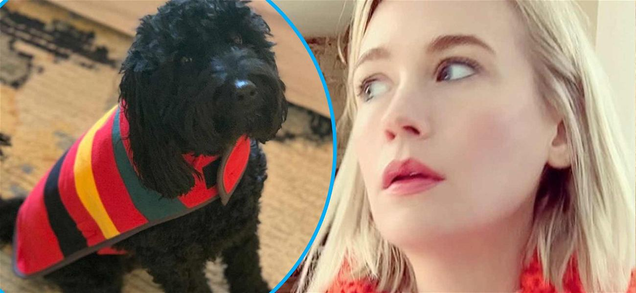 January Jones' Little Dog Bitten By Rattlesnake And Is In The Hospital