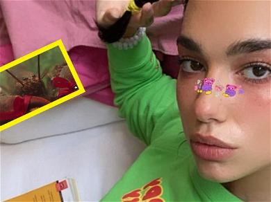 Dua Lipa Teases Tour With Lobsters & Sexy Sassy Video On Instagram!?