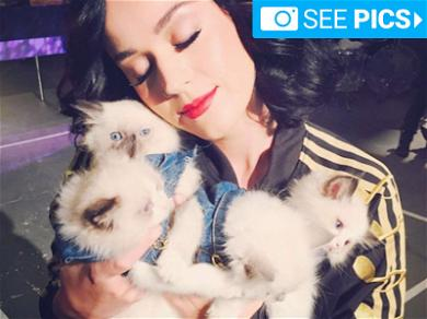 Celebs Are Feline Fine for National Cat Day!
