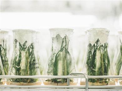 """""""THE SCIENCE OF SOURDOUGH STARTERS"""" BY TIM CHIN (SERIOUS EATS)"""