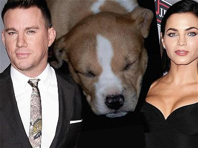 Channing Tatum Pays Tribute to Dog He Shared With Jenna Dewan: 'I Miss You Everyday'