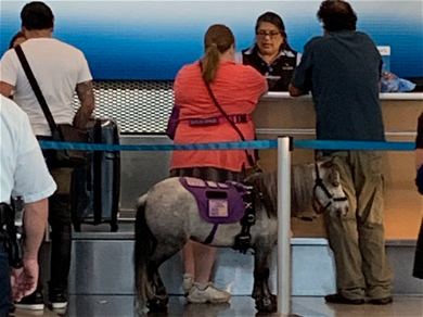 Woman Brings Miniature Support Horse on American Airlines Flight