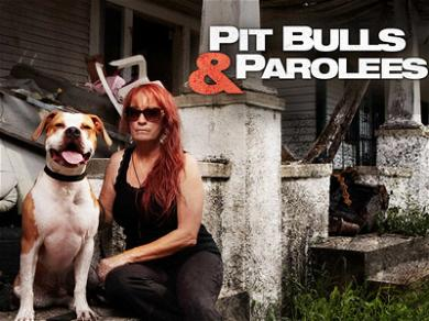 The Dog Shelter From 'Pit Bulls & Parolees' Is in Dire Need of Help