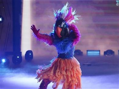 Exotic Bird Flies Home In Latest 'Masked Dancer' Elimination