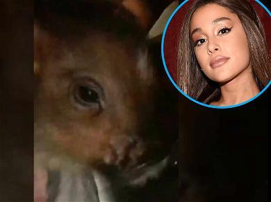 Ariana Grande Shows Off Piggy Smallz, Who Already Has Way More Instagram Followers Than You