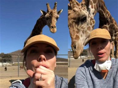 Whitney Cummings Goes Rogue at Malibu Wine Safari, Cares for Animals After Wildfires