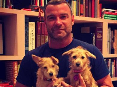 Liev Schreiber Adopts Adorable Hurricane Harvey Dogs
