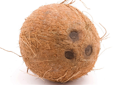 Everyone Thinks the New iPhone 11 Pro Looks Like a Coconut