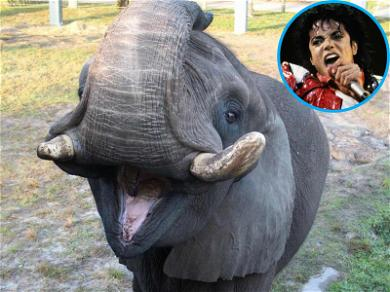 Michael Jackson's Elephant Takes a Walk After Escaping from Jacksonville Zoo Enclosure