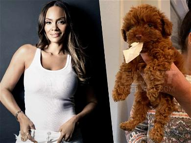 'Basketball Wives' Star Evelyn Lozada Demands Investigation Into Breeder After Dogs Become Gravely Ill
