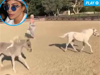 Lady Gaga Horses Around With New Fur Babies