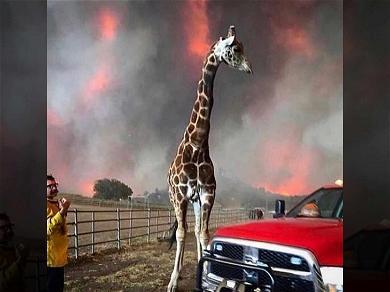 Celeb Hot Spot Malibu Wine Safari Sues Southern California Edison Over Woolsey Fire