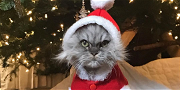 Kate Beckinsale's Angry Santa Kitty Has Fans Rolling