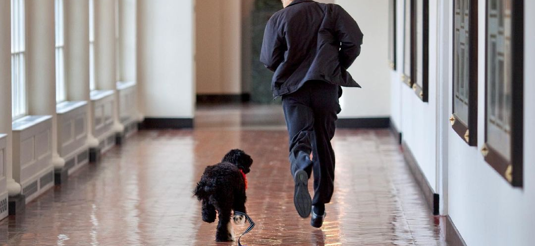 President Obama's Dog, Bo, Dies After Batting Cancer — 'We Will Miss Him Dearly'