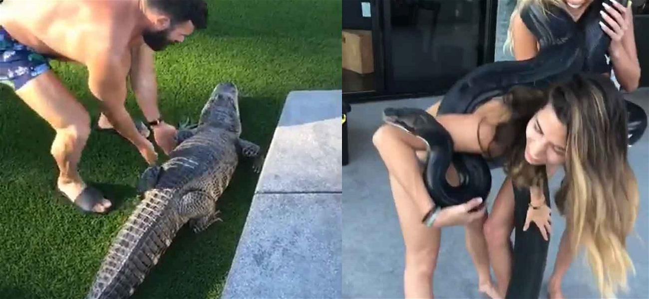 Dan Bilzerian Lets the Giant Snake Out of Its Cage … and Gets Bit During Reptile Party