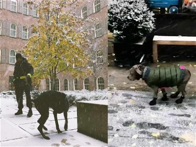 The Weeknd, Bella Hadid & Justin Theroux's Dogs Hilariously Hate Their 1st Snow Day