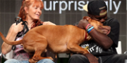 'Pit Bulls and Parolees' Teases Emotional Rescues, Accidents & An Arrest In New Season
