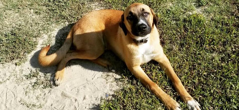 'Teen Mom' David Eason Throws Shade at Dead Dog While Praising New Family Pet's Behavior