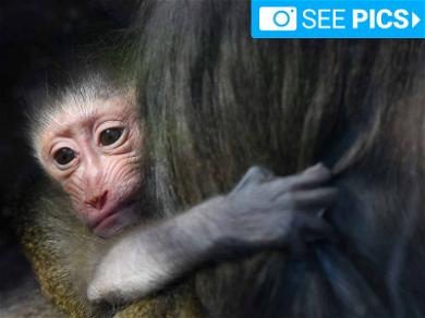 You Need These Baby Mandrill Photos in Your Life