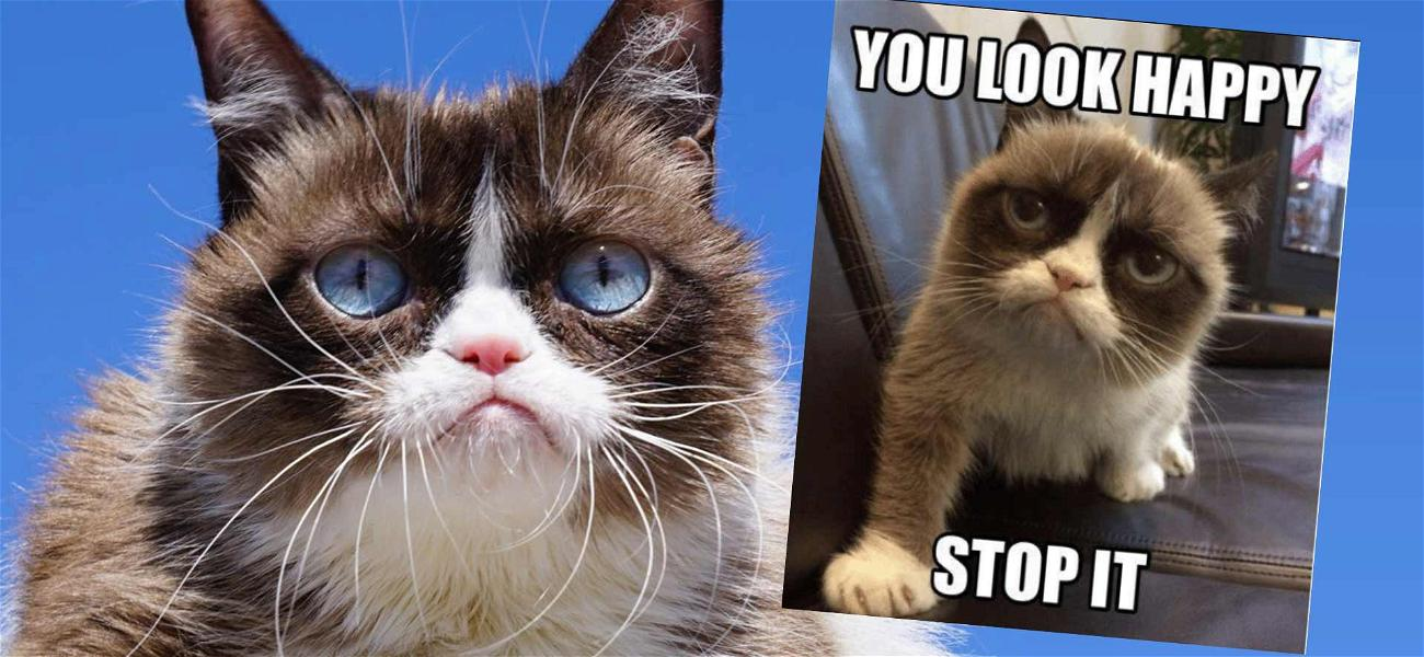 Grumpy Cat Dead at 7-Years-Old After Battling Infection