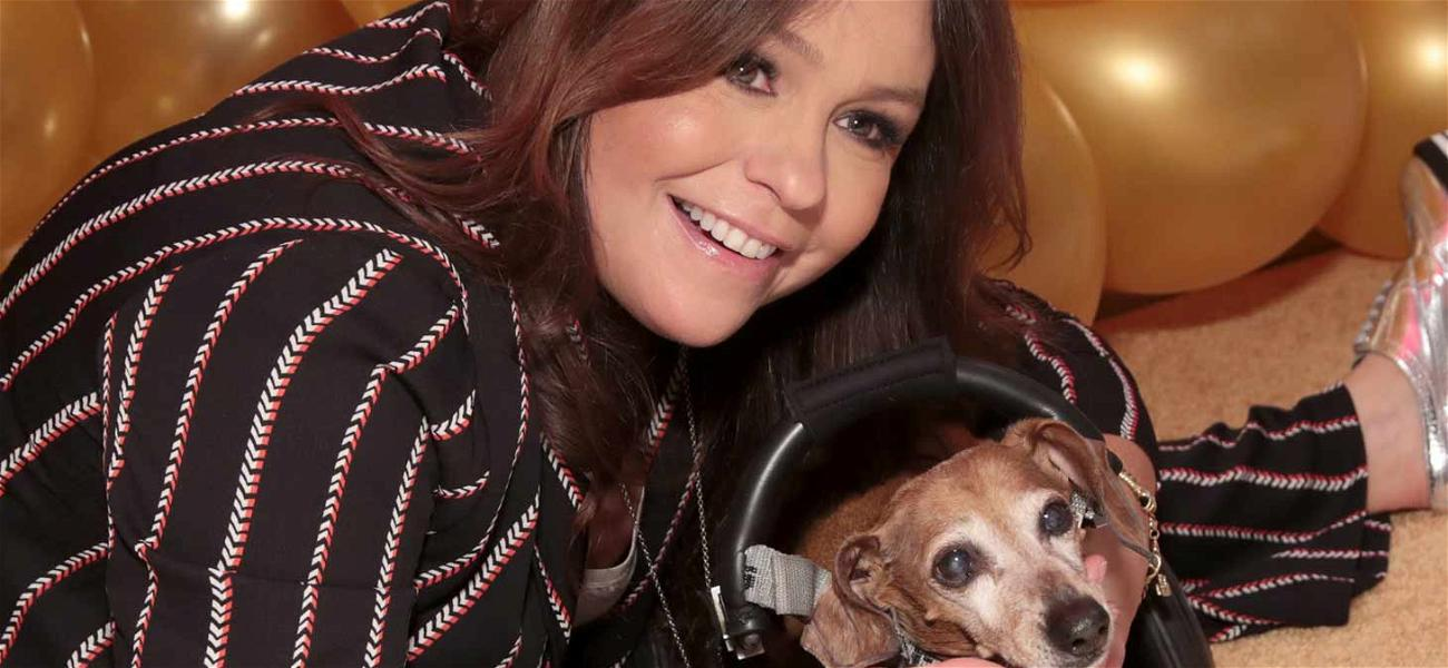 Rachael Ray Denies Any Wrongdoing in $5 Million Dog Food Lawsuit